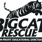 Dica: Big Cat Rescue